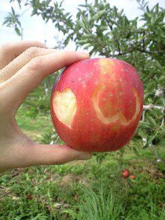 *んん?リンゴが?*